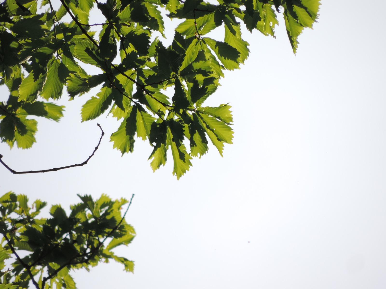 一般社団法人 森林風致計画研究所